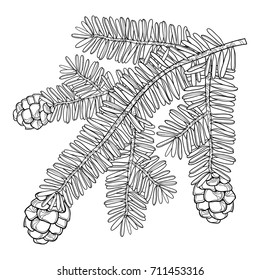Vector branch with outline Tsuga or eastern Canadian hemlock in black isolated on white background. Conifer  Hemlock tree with pine and cones in contour style for botanical design and coloring book.