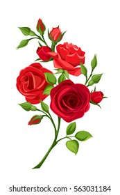 Vector branch of red roses isolated on a white background.