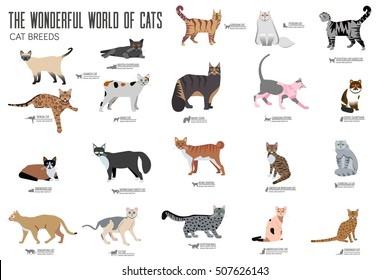 Vector breed cats icons set. Cute animal illustrations pet design . Collection different kitten layout flat cover