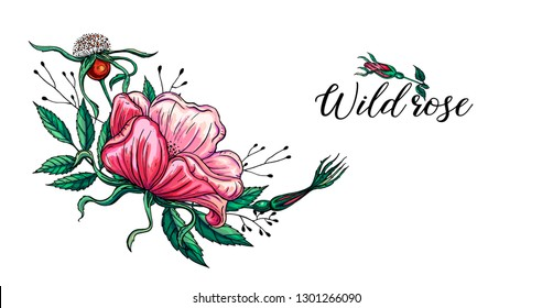 Vector bright flower color composition with wild rose flowers