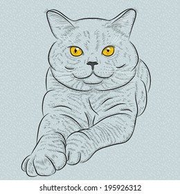Vector British Shorthair blue cat with yellow eyes lies and looks