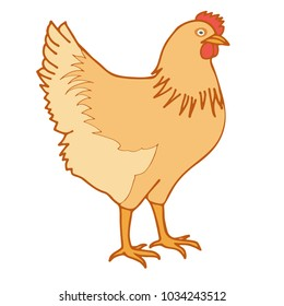 vector brown chicken isolated