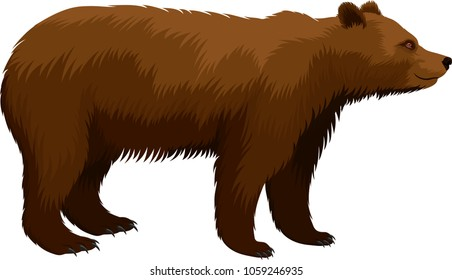 vector brown grizzly bear