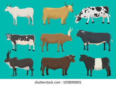 Vector bulls and cows farm animal cattle mammal nature beef agriculture and domestic rural bovine horned cartoon buffalo character illustration. Farming pasture agriculture horn bulls and cows