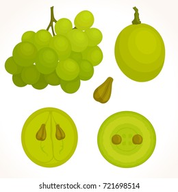 Vector bunch of grapes on a white background. half, whole and cut grapes in different angles.
