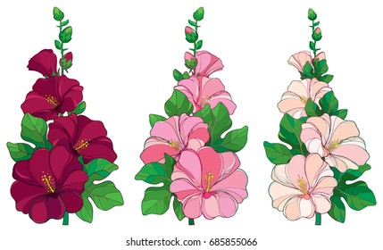 Vector bunch with outline Alcea rosea or Hollyhock flower in pink and white, bud and green leaf isolated on white background. Floral set in contour style with ornate Hollyhock for summer design.