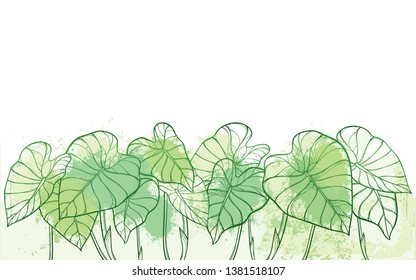 Vector bunch of outline tropical leaf Colocasia esculenta or Elephant ear or Taro plant in pastel green on the white background. Ornate contour Colocasia foliage for summer greenery decor.