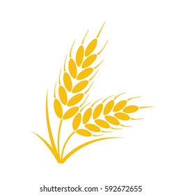 vector bunch of wheat, rye or barley ears with whole grain and leaves, yellow wheat, rye or barley crop harvest symbol or icon isolated on white background,