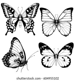Vector butterfly hand drawn set sketch style on white background.