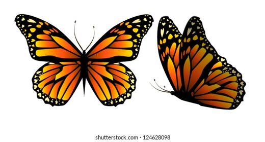 vector butterfly with hearts on wings