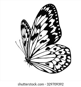 Vector Butterfly Idea Leuconoe isolated on white background. Black and white. Hand drawn illustration