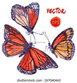 vector butterfly painted in watercolor. beautiful flying butterfly - floral design elements painted by hand. single element