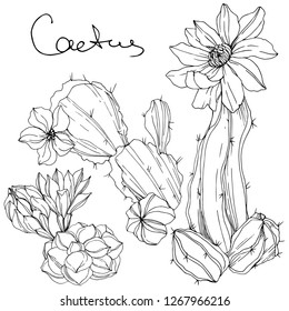 Vector Cacti floral botanical flower. Wild spring leaf wildflower isolated. Black and white engraved ink art. Isolated cacti illustration element.