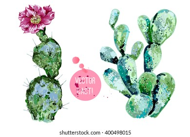 Vector cactus isolated on white background, watercolor style