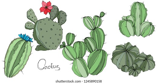 Vector Cactus. Wild spring leaf wildflower isolated. Green engraved ink art. Isolated cacti  illustration element on white background.