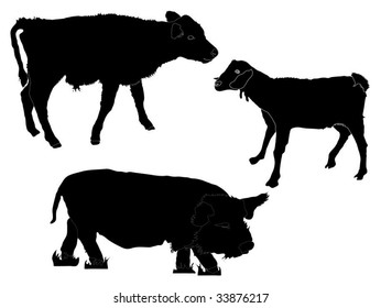 Vector calf, goat and pig (from the Petting zoo)