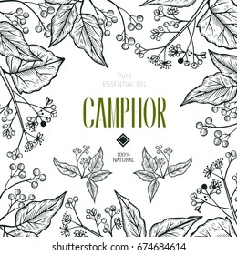 Vector camphor hand drawn illustration.Healing,cosmetics herb.Medical plant. Great for traditional medicine design.Botanical plant. Great design for natural and organic products.