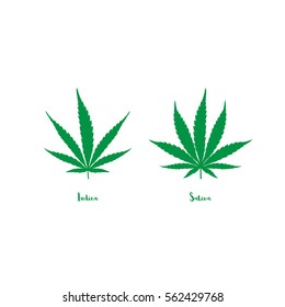 Vector cannabis leaves set - green plant isolated on white, medical sativa and indica indicating chart, marijuana silhouettes.