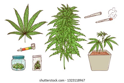 Vector cannabis smoking sketch collection. Green marijuana plant in pot, green leaves, ripe buds, hashish in package, bong, paper spliff, butt and weed joint. Isolated illustration