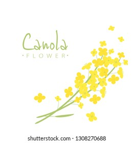 Vector canola flowers illustration