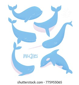 Vector card with blue whale, sperm whale, narwhal, killer whale and humpback whale