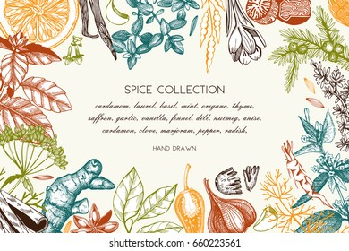 Vector card design with hand drawn spices and herbs. Decorative background with aromatic plants sketch. Vintage kitchen template. Food ingredients