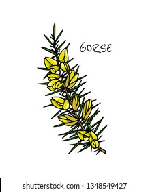 Vector card with hand drawn gorse twig with flowers. Beautiful floral design elements, ink drawing