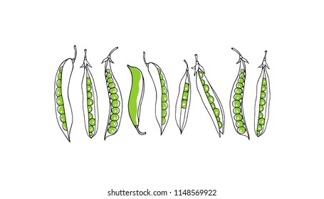 Vector card with hand drawn green pea pods. Beautiful food design elements