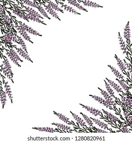 Vector card with hand drawn heather twigs. Beautiful floral design elements