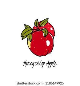 Vector card with hand drawn Honeycrisp apple. Beautiful food design elements. Ink drawing