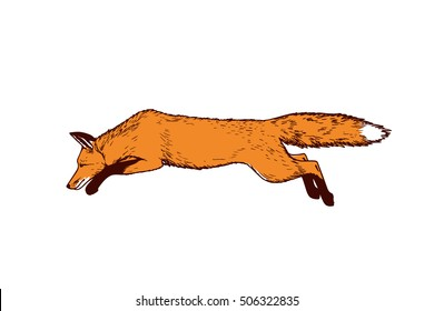 Vector card with hand drawn hunting fox made with pen and ink. Realistic illustration of jumping fox, side view. Beautiful animal illustration