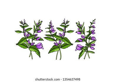 Vector card with hand drawn scullcap twigs. Beautiful floral design elements, ink drawing