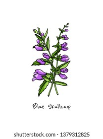 Vector card with hand drawn skullcap twigs. Beautiful floral design elements, ink drawing