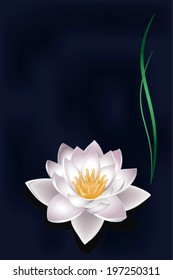 vector card with lotus flower