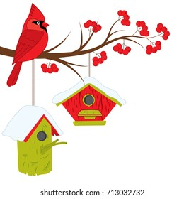Vector cardinal sitting on rowan tree branch. Vector cardinal,  branch with red berries and birdhouses. Cardinal vector illustration