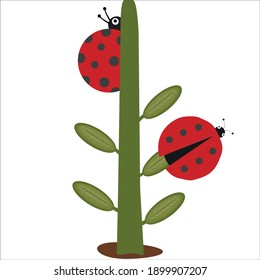 Vector cartoon 2 ladybugs and plant icon isolated on white background. Simple modern flat illustration. Insect with dots. Learning for children.