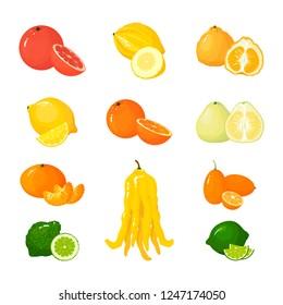 Vector cartoon big Citrus set. Icons isolated. Grapefruit, pomelo, orange, tangerine lemon and lime, uglifruit and citron, kumquat and buddha hand.