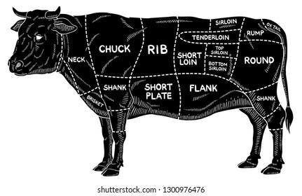 Oxen Cartoon témájú képek, stockfotók és vektorképek | Shutterstock