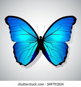 Vector Cartoon Blue Butterfly isolated
