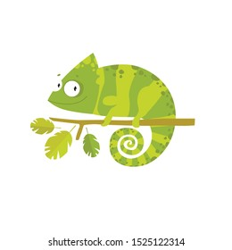 Vector cartoon chameleon. African animal. funny lizard. green lizard. Chameleon on a branch.