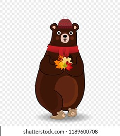 Vector cartoon character illustration of cute bear in red knitted scarf and hat holding colored fallen maple leaves bouquet in paws isolated on transparent background. Autumn design clip art element