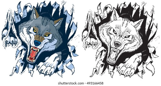 Vector cartoon clip art illustration set of an angry gray or timber wolf mascot ripping, punching, or tearing through a cloth or paper background in color or black and white.