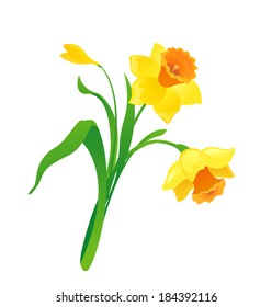 Vector cartoon daffodil