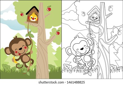 vector cartoon of funny monkey and bird in the tree, coloring book or page