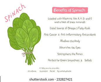 vector cartoon hand drawn spinach health benefits illustration