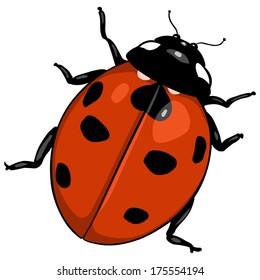 Beautiful Vector Cartoon Ladybug