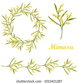 Vector cartoon mimosa spring flower illustration including wreath and floral border
