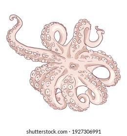 Vector Cartoon Octopus . Cephalopod Illustration