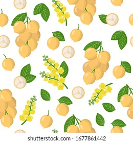 Vector cartoon seamless pattern with Baccaurea ramiflora or Burmese grape exotic fruits, flowers and leafs on white background for web, print, cloth texture or wallpaper.