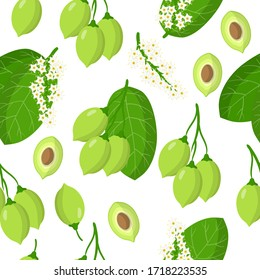 Vector cartoon seamless pattern with Terminalia ferdinandiana or Kakadu plum exotic fruits, flowers and leafs on white background for web, print, cloth texture or wallpaper